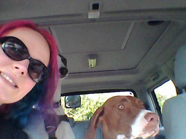 Dogs in the van